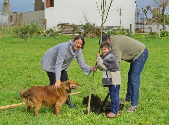 Plantacion de arboles 2