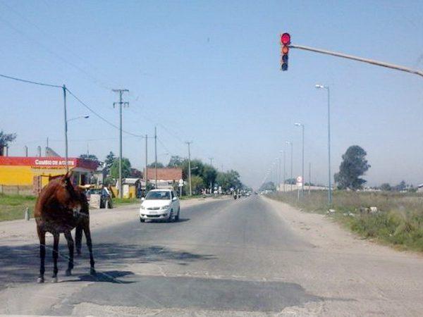 caballo-suelto